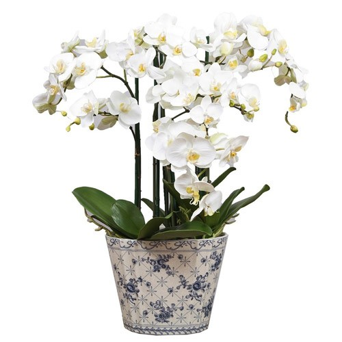 Send Baby Orchids To Beirut With A Vase