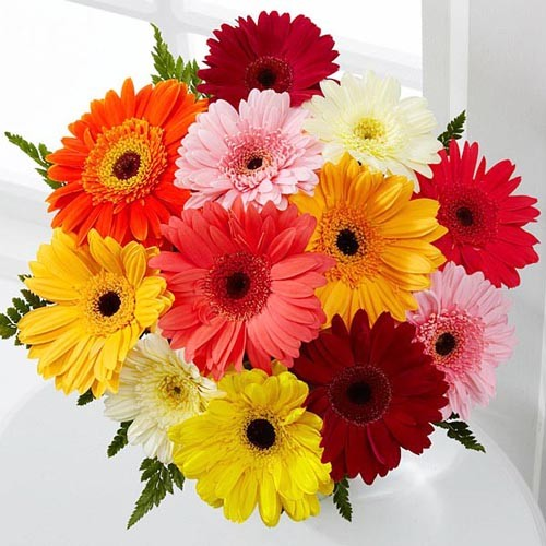 Send Colorful Gerberas And Make A Daisy Lovers In Jordan Dream Come