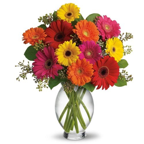 send lolipop our 12 colorful gerberas in a vase to saudi arabiaa gerbera daisy lover\u0027s dream come true 12 big, bold and beautiful gerbera daisies beautifully arranged in a glass vase a cheerful arrangement great for