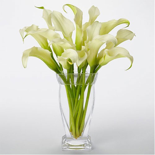 Captivating Calla Lilies