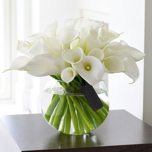 Graceful Calla Lily