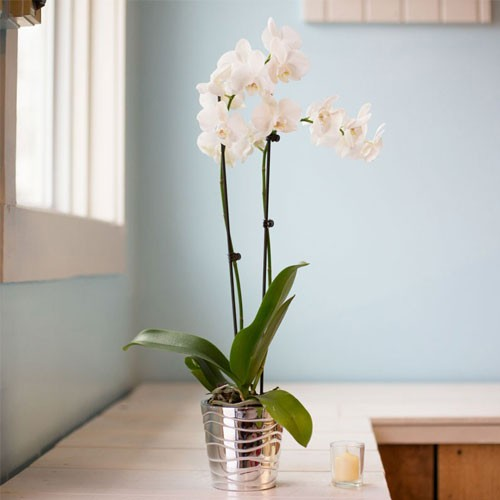 Simplicity of Orchids